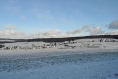 Winter_004